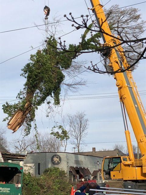 A crane lifting pieces of a broken tree